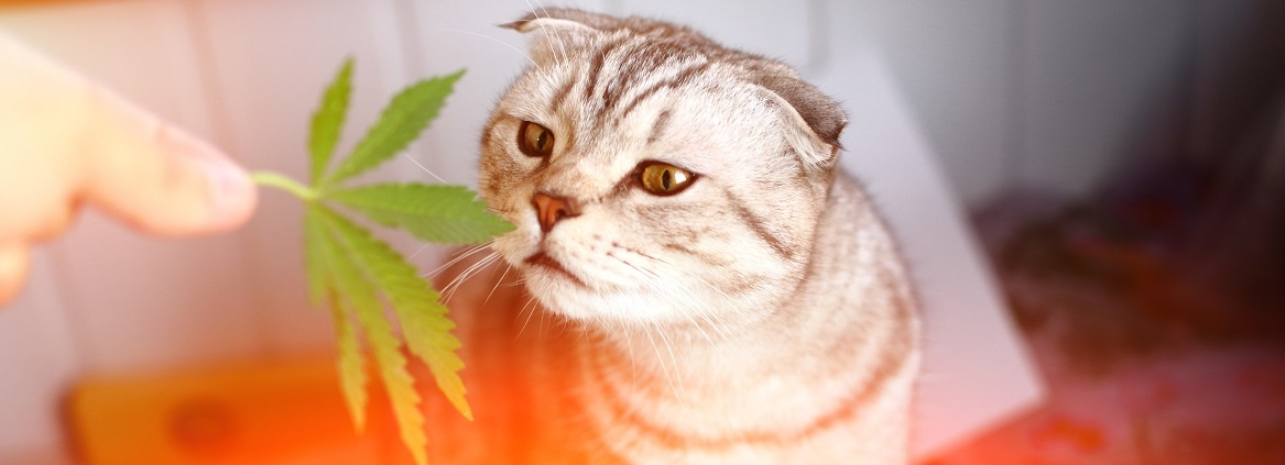 CBD Hemp Oils For Pets