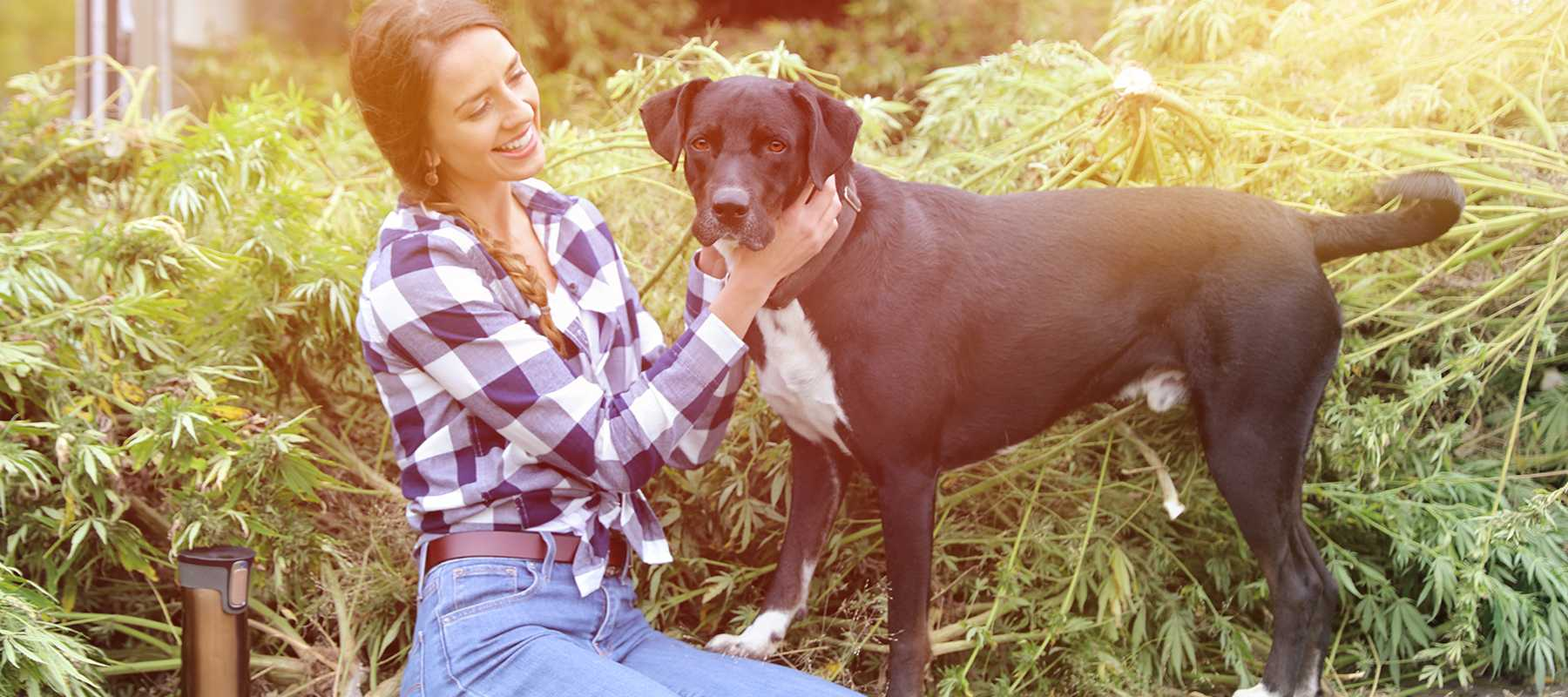 CBD for Pets – What Is It and What Does It Do for My Pet?