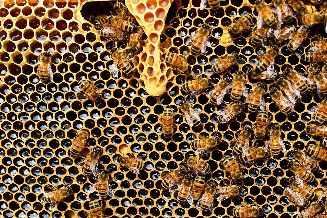 Comment le chanvre et le CBD peuvent-ils aider à sauver les abeilles ?